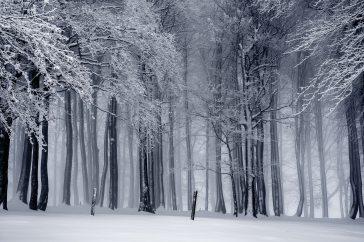 black-and-white-cold-fog-235621