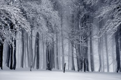 black-and-white-cold-fog-235621