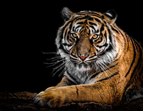 animal-animal-photography-big-cat-792381
