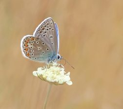bloom-blossom-butterfly-158536
