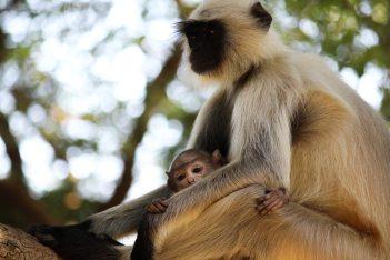 animal-animal-photography-ape-633980