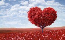 artistic-blossom-bright-207962