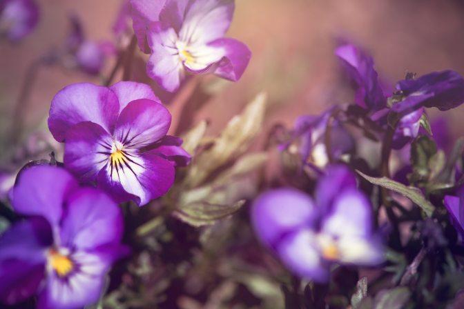 beautiful-bloom-blooming-459086