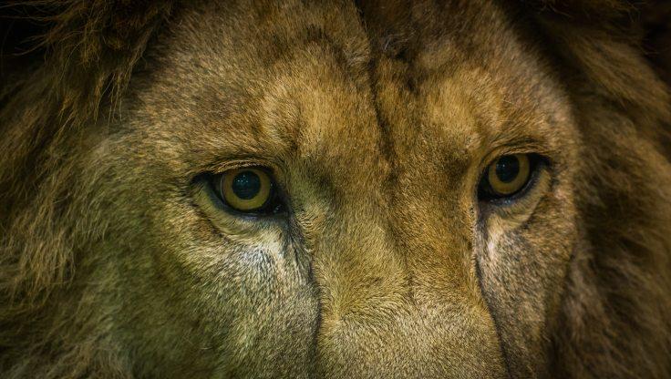 animal-animal-photography-big-cat-802215 (1)