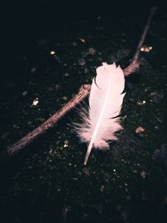 close-up-dark-feather-394376