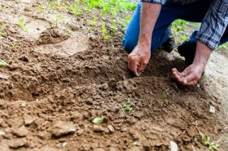agriculture-close-up-cultivation-169523