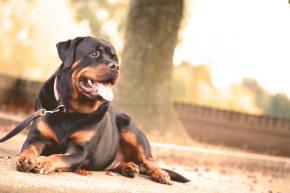 animal-dog-domestic-68798
