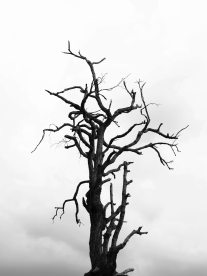 black-and-white-black-and-white-branches-216695