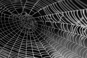 spider-web-34225